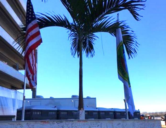 Hollywood-palm