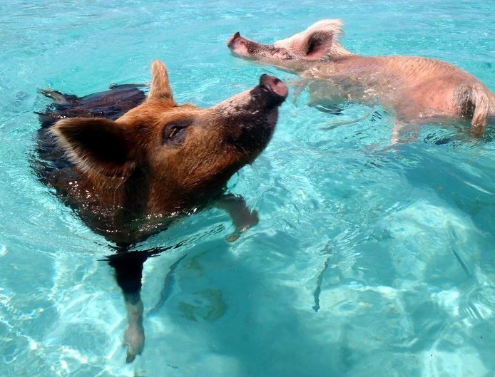6 Animals You Didn't Know Love To Swim