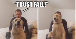 "Video: Adorable Dog ""Trust Falls"" on Command"