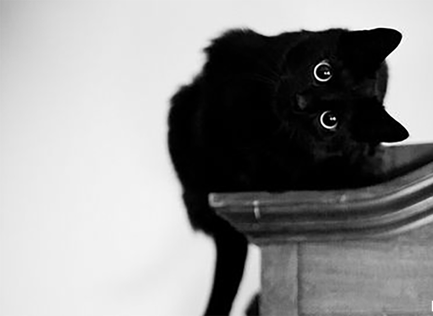 13 Black Cats That Will Make You Forget Your Superstition