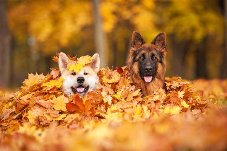 Animals who love fall