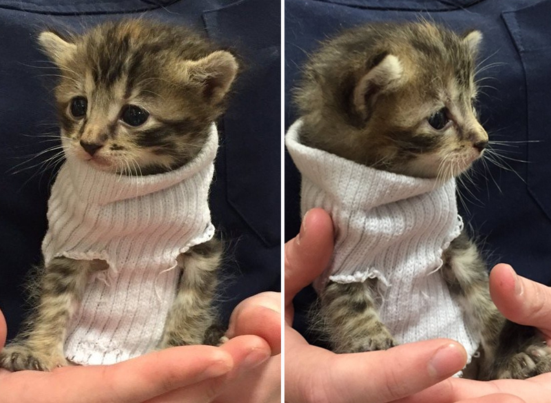 Tiny Kitten Rescued From Hurricane Matthew Gets Tiny Sock